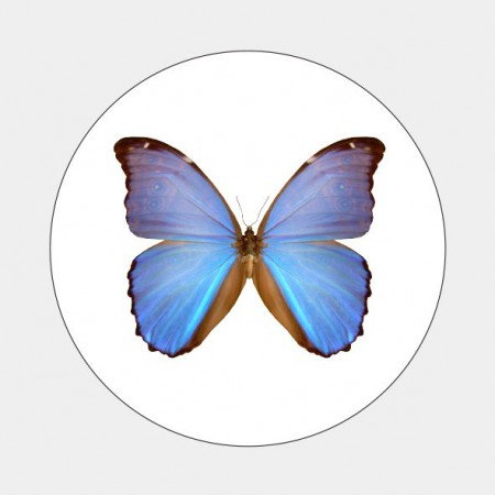 Sluitzegel Blauw vlindertje